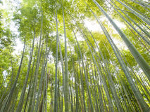 Bamboo Forest at Kyoto Arashiyama area Royalty Free Stock Photos
