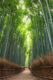 Bamboo Forest in Kyoto, Arashiyama, Japan Royalty Free Stock Images