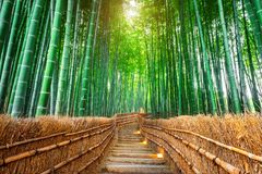 Bamboo Forest in Kyoto, Japan Stock Image