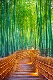 Bamboo Forest in Kyoto, Japan.  Royalty Free Stock Photo
