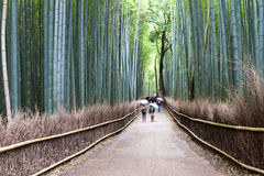 Bamboo Forest. In Kyoto, Japan Royalty Free Stock Photos