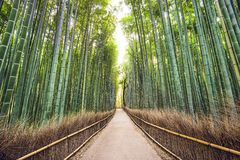 Bamboo Forest. Of Kyoto, Japan Royalty Free Stock Images