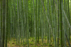 Bamboo forest in Kyoto Stock Image