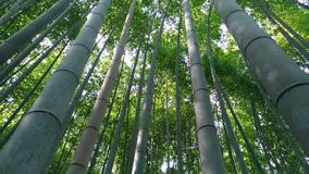 Bamboo forest. In Kyoto Japan Stock Image