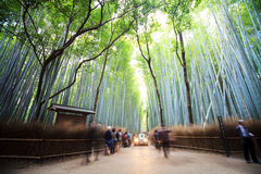 The bamboo forest of Kyoto, Japan. Royalty Free Stock Photo