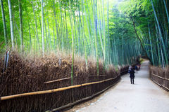 The bamboo forest of Kyoto, Japan. Stock Photos