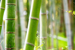 The bamboo forest of Kyoto, Japan Royalty Free Stock Image