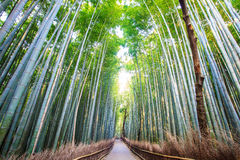 The bamboo forest of Kyoto, Japan Royalty Free Stock Photography