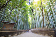 The bamboo forest of Kyoto, Japan. For adv or others purpose use Stock Photo