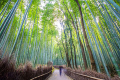 The bamboo forest of Kyoto, Japan. For adv or others purpose use Royalty Free Stock Photo