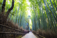 The bamboo forest of Kyoto, Japan Stock Photos