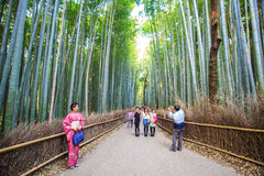 The bamboo forest of Kyoto, Japan. Kyoto, Japan - April 14, 2013: The bamboo forest of Kyoto, Japan Royalty Free Stock Images