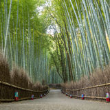 Bamboo forest in Kyoto Royalty Free Stock Photos