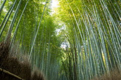 Bamboo forest in Kyoto Stock Photo