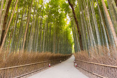 Bamboo forest in Kyoto, Japan Stock Photo