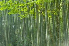 Bamboo forest at Kyoto, Japan. Bamboo forest at Arashiyama district in Kyoto, Japan Royalty Free Stock Photos