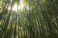 Bamboo forest at Kyoto, Japan. Bamboo forest at Arashiyama district in Kyoto, Japan Royalty Free Stock Photo