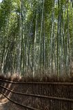 Bamboo forest at Kyoto, Japan. Bamboo forest at Arashiyama district in Kyoto, Japan Stock Photography