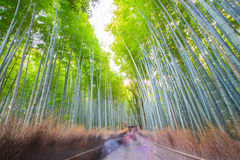 Bamboo forest, Kyoto, Japan Royalty Free Stock Images
