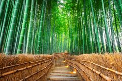 Bamboo Forest in Kyoto, Japan Stock Photography