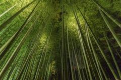 Bamboo forest in Kyoto, Japan. Bamboo grove, bamboo forest at Arashiyama, Kyoto, Japan Stock Images