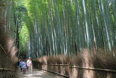 Bamboo forest Kyoto Japan Stock Photo