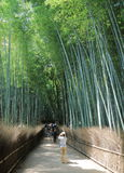 Bamboo forest Kyoto Japan Royalty Free Stock Photo