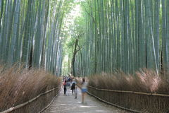 Bamboo forest Kyoto Japan stock photos