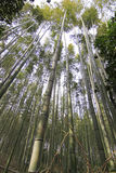 Bamboo forest at kyoto japan Stock Photo