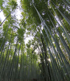 Bamboo forest at kyoto japan Stock Images