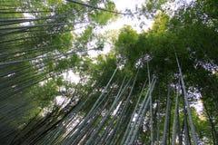 Bamboo forest at kyoto japan. Sagano high bamboo forest at kyoto japan Stock Image