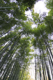 Bamboo forest at kyoto japan Royalty Free Stock Photos