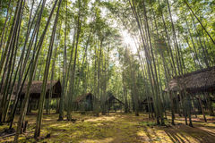 The bamboo forest in the local village of Inle lake, Myanmar. Stock Photos