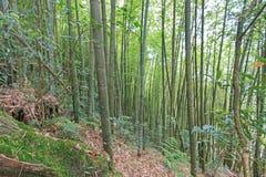 Bamboo Forest in Nantou, Taiwan Stock Photos
