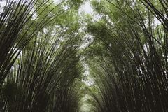 Bamboo forest , Natural background arch on both side for walking at Thailand. Bamboo forest , Natural background arch on both side for walking at Nakhon Nayok royalty free stock photography