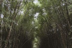 Bamboo forest , Natural background arch on both side for walking at Thailand. Bamboo forest , Natural background arch on both side for walking at Nakhon Nayok stock images