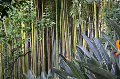 Bamboo forest in the nature park green photo Stock Images