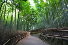 Bamboo forest near Kyoto, Japan. A view of the path inside the Bamboo forest in the Arashiyama district, in the western outskirts of Kyoto, Japan Royalty Free Stock Images