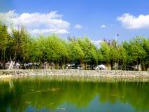 A bamboo forest. Near a lake inside Dali University in dali city yunnan province China Royalty Free Stock Photography