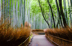 The bamboo forest, nice place to travel in Arashiyama, Japan. Japanese human made bamboo forest, such a huge place and a nice moment of nature there. Should have Royalty Free Stock Photos