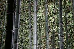 Bamboo Forest at Night Stock Photos