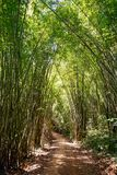 Bamboo forest path Stock Photo