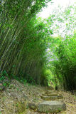 Bamboo forest with path Stock Images