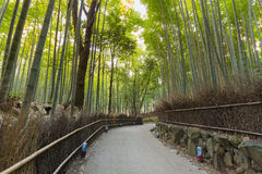 Bamboo forest and path in Arashiyama. Kyoto, Japan Stock Image