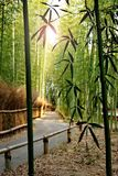 Arashiyama, the bamboo forest with the path. Bamboo forest with the path, Arashiyama, Kyoto, Japan. Selective Focus and Lens Flare Effect royalty free stock photo