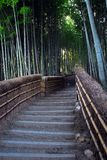Bamboo forest path. A path through a bamboo grove Stock Photos