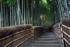 Bamboo forest path. A path through a bamboo grove Royalty Free Stock Photos