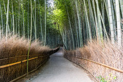 Bamboo forest path in japan. Green Bamboo forest path in japan Stock Photo