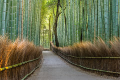 Bamboo forest path in japan. Green Bamboo forest path in japan Royalty Free Stock Image