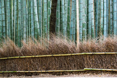 Bamboo forest path in japan Stock Photo